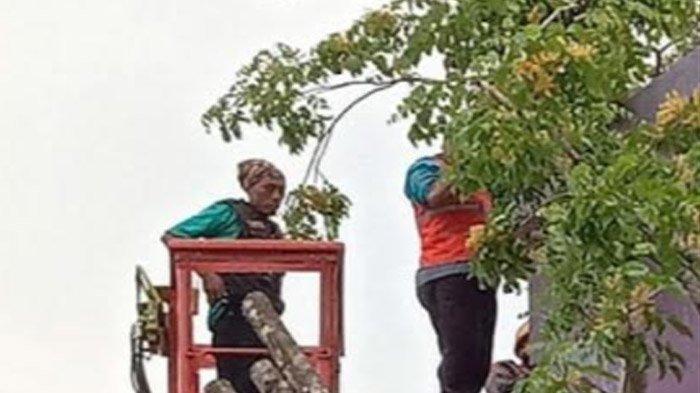 Pepohonan di Kota Kediri Bertumbangan saat Hujan, Masyarakat Diminta Manfaatkan Call Center BPBD