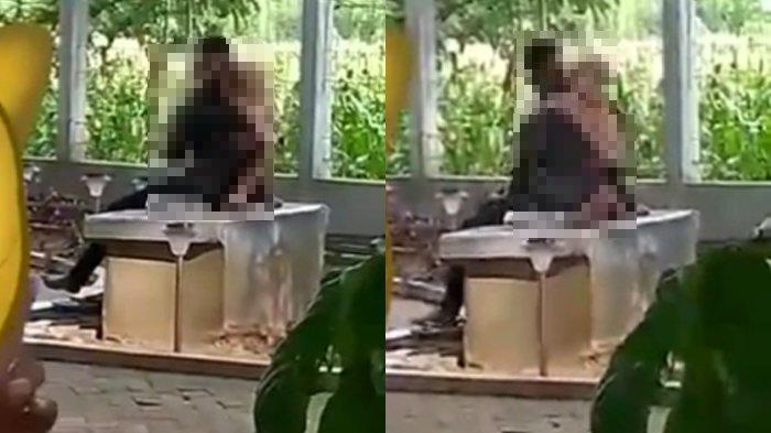 Ada Sejoli Berciuman dan Viral di Taman Klono Sewandono Kabupaten Ponorogo, DLH Ngaku Kecolongan