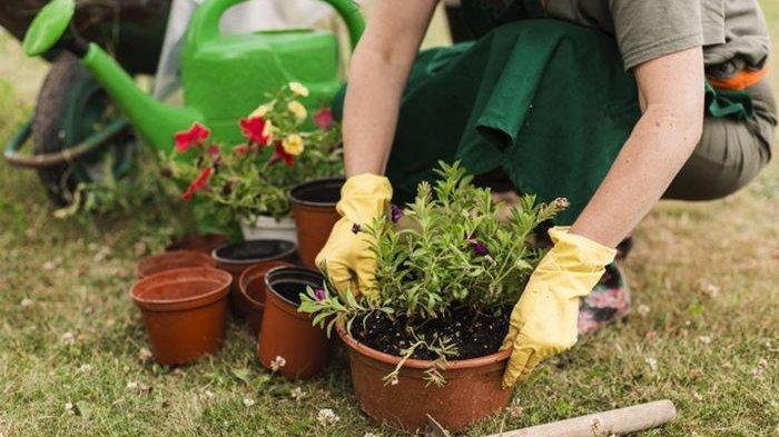 Berkebun Tak sekedar Menanam lalu Memanen, Beberapa Hal yang Bisa Kita Pelajari dari Kebun