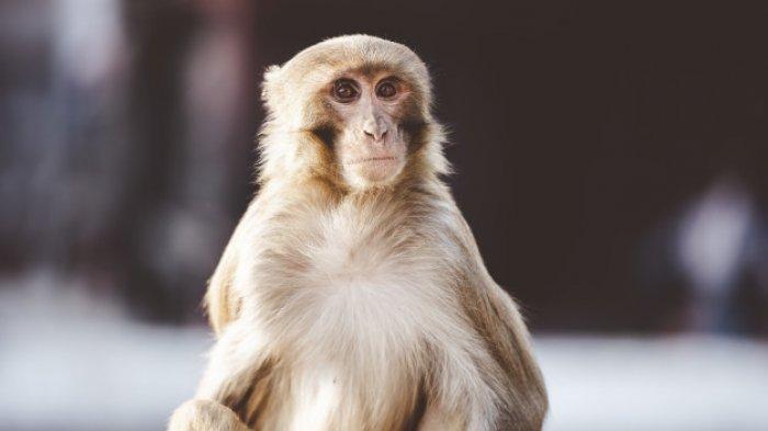 LIFEPACK: Penyebab, Gejala, dan Cara Mengobati Cacar Monyet atau Monkeypox