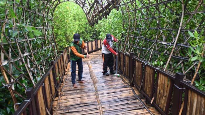 Musim Hujan, Pengelola Ekowisata Mangrove Wonorejo Lakukan Perawatan Jogging Track