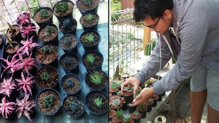 Kaktus Mini kembali Naik Daun, Hobi Baru di Tengah Pandemi