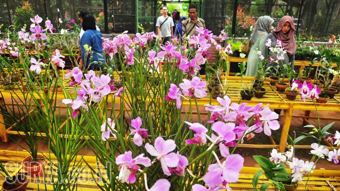 Taman Bunga Anggrek Kediri