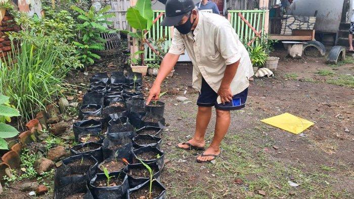 Maksimalkan Lahan Sempit, Kelurahan di Banyuwangi Disulap Menjadi Kampung Jahe