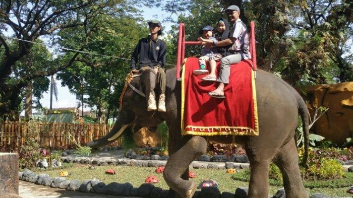 Rasakan Sensasi Tunggangi Gajah dalam Hutan lewat Wahana Breakfast with Elephant di KBS