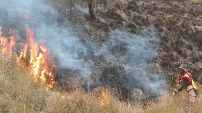 Kawasan Hutan yang Terbakar di Gunung Semeru Meluas, Jalur Pendakian Ditutup