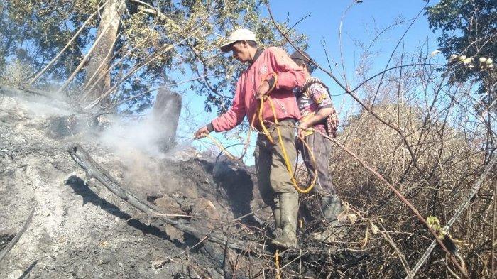Kebakaran Hutan di Gunung Semeru Meluas Hingga Mencapai Ranu Pani