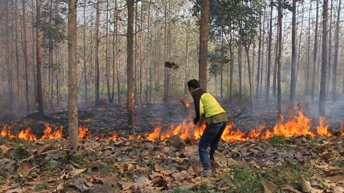 Belasan Hektar Hutan Jati di Kemlagi Mojokerto Terbakar