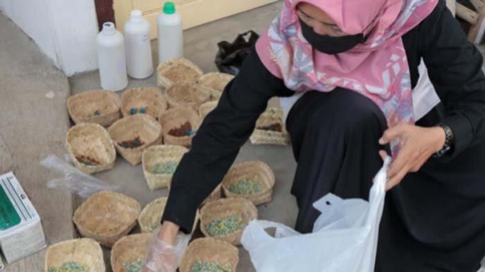 Tips DKPP Kota Kediri Usir Hama Tikus yang Serang Lahan Jagung Petani di Kelurahan Bandar Lor