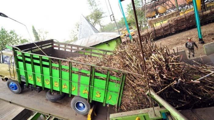 Komisaris PTPN XI Berharap Program Agroforesty sebagai Solusi Tambah Lahan Tebu