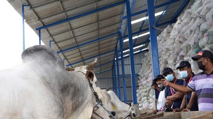 Tingkatkan Produktivitas Hewan Ternak, SIG Gelar Pelatihan UMKM Sektor Peternakan di Gresik - Tuban
