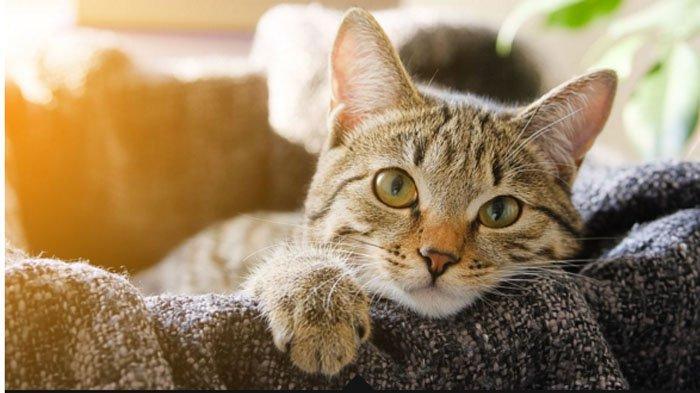 Kucing Hewan Pertama Yang Tertular Covid-19 di Inggris