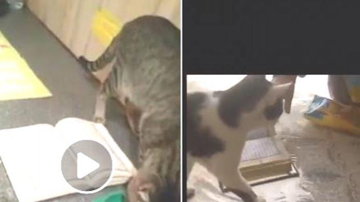 VIDEO - Subhanallah, Reaksi Kucing ketika Alquran di Bawah Kakinya