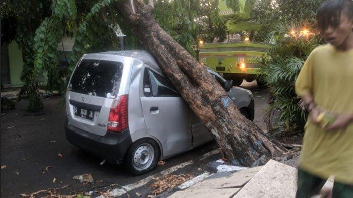 Hujan Angin di Lamongan akibatkan Pohon Tumbang lalu Timpa Mobil dan Warung, begini Kondisinya