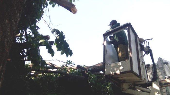 2 Toko di Lamongan Rusak Parah Ditimpa Pohon Tumbang akibat Angin Kencang, begini Kronologinya