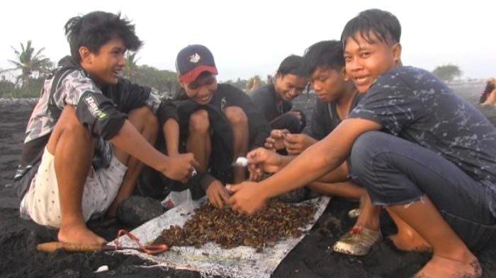 Jaga Fenomena Kerang Simping, Pemkab Lumajang Larang Nelayan Tangkap Ikan Pakai Pukat Harimau
