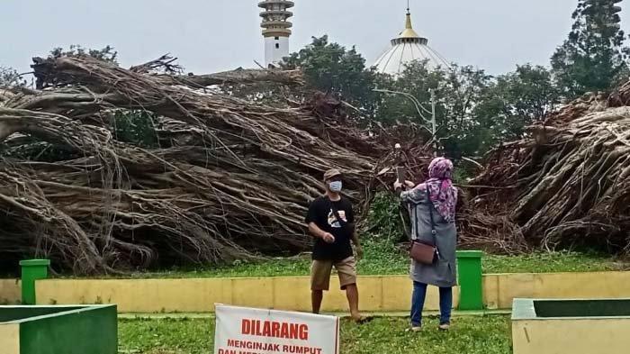 Warga Pesimistis Pohon Beringin Baru Sekokoh Pohon yang Tumbang di Alun-alun Lumajang
