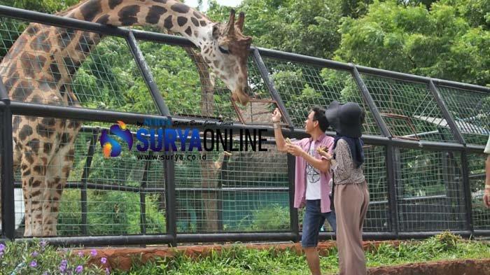 Libur Natal dan Tahun Baru 2019, Maharani Zoo & Goa Lamongan Gelar Even Khusus