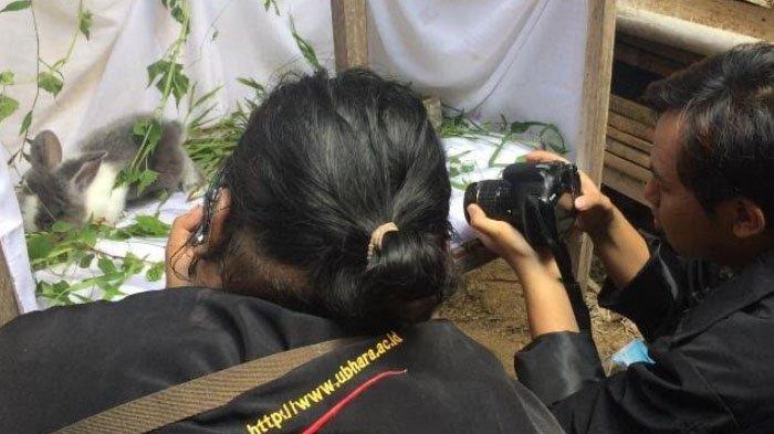 Branding Kelinci Hias di Media Sosial, Cara Mahasiswa KKN Ubhara Bantu Pemasaran Peternak di Prigen