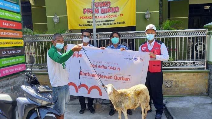 JIIPE Salurkan Hewan Kurban di Sembilan Desa Sekitar Kawasan Manyar Gresik