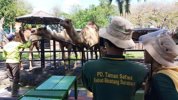 Kebun Binatang Surabaya Gelar Wisata Virtual Family Bersama Satwa