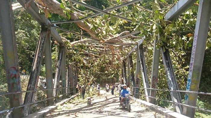 Angin Kencang Tumbangkan Pohon Raksasa di Trawas, Mojokerto, begini akibatnya