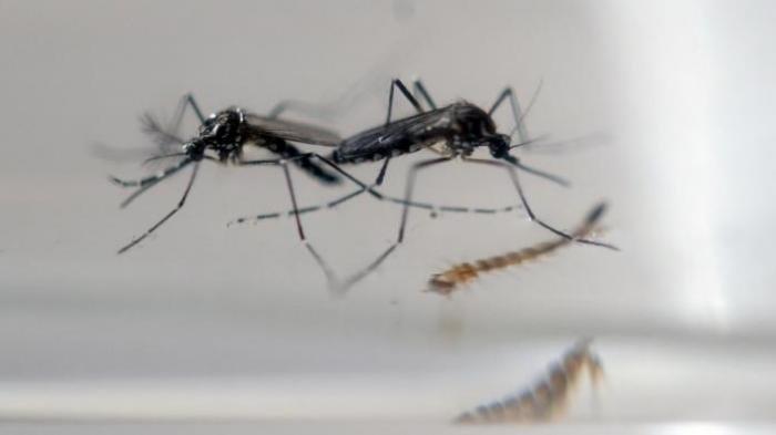 Musim Hujan Banyak Nyamuk, Ini Cara Ampuh Mengusirnya Pakai Bahan Alami, Misalnya Daun Sereh