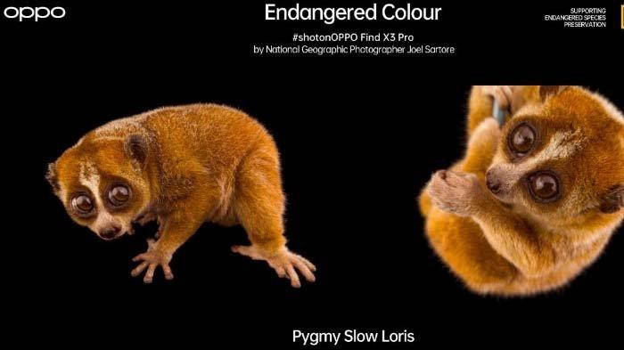 OPPO Find X3 Pro dan National Geographic Pelopori Kampanye 'Endangered Colour', ini Tujuannya