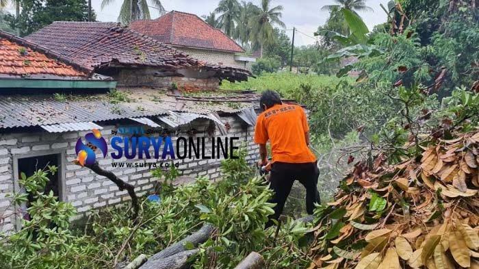 Hujan Deras Disertai Angin Kencang Robohkan Pohon di Desa Plakpak Pamekasan, Timpa Rumah Warga