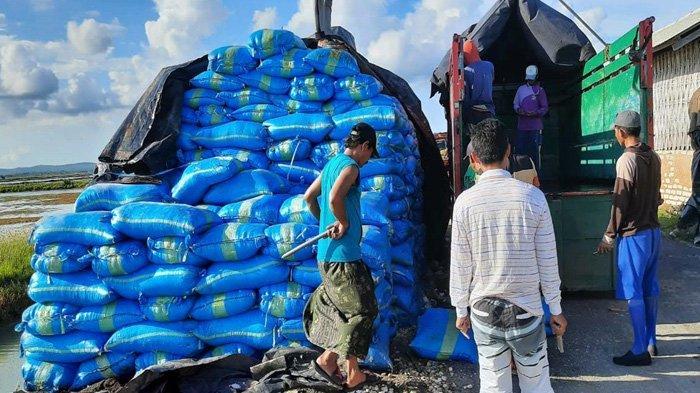 PT Garam Fokus Serap Garap Impor, Garam Rakyat Hanya Tertampung 1,5 Juta Ton