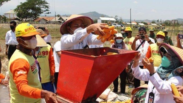 Panen Jagung Melimpah, Wabup Brebes Minta Pemerintah Pusat  Tak Perlu Impor