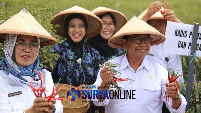 Hadiri Acara Panen Raya, Bupati Rijanto Dorong Petani Cabai di Kabupaten Blitar Bentuk Koperasi