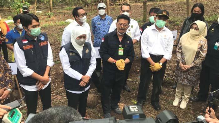 Gubernur Larang Ekspor Katak atau Bibit Porang, Mentan: Jatim Jadi Percontohan Budidaya Porang
