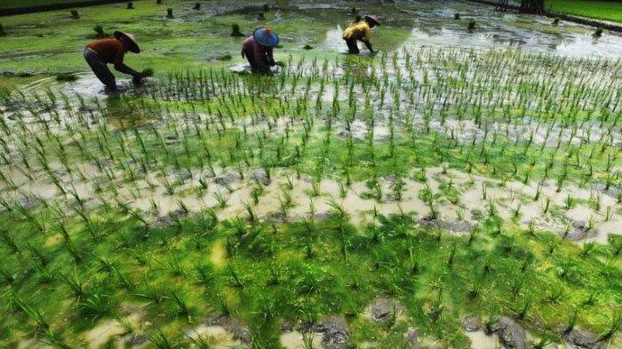 Stok Pupuk Bersubsidi Dipastikan Aman di Kabupaten Malang