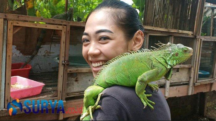 Bisnis Reptil Milik Ocha Malah Bersinar selama Pandemi