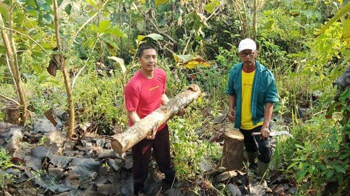 Pembalakan Hutan di Blitar Makin Nekat, Pelaku Diduga Memanggul Kayu Sejauh 1 KM
