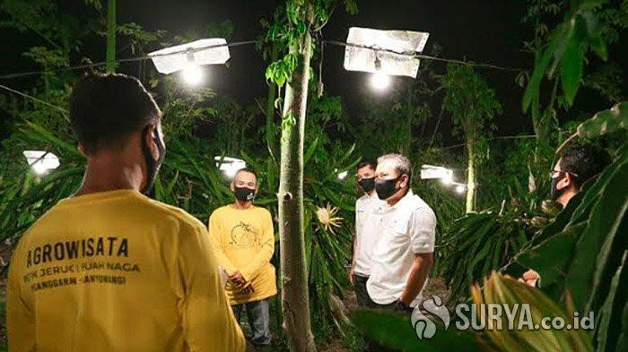 Program Elektrifikasi Buah Naga di Banyuwangi Raih Penghargaan
