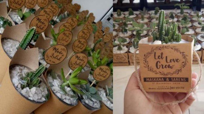 Souvenir Kaktus Bisa Jadi Alternatif untuk Pecinta Tanaman Hias, Harga Mulai Rp 6.500