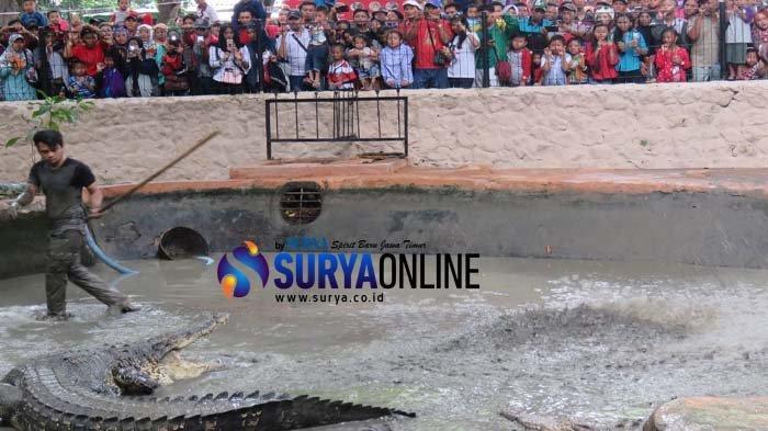 Kebun Binatang Surabaya Dipadati Puluhan Ribu Pengunjung, Diprediksi Terus Meningkat