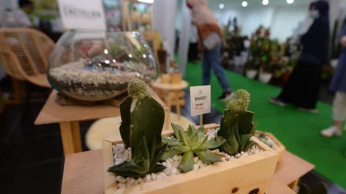Aneka Kaktus dan Sukulen dalam Satu Wadah, Buket Unik Pemanis Dekorasi