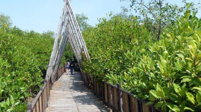 Jumlah Pengunjung Kawasan Wisata Mangrove Wonorejo Dibatasi Cuma 400 Orang