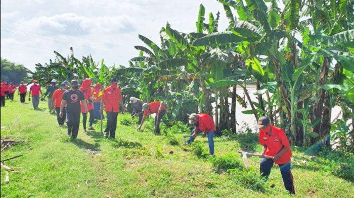 Peringati HUT Ke-48 PDIP, Kader Banteng Tuban Tanam 1.500 Pohon di Bantaran Bengawan Solo