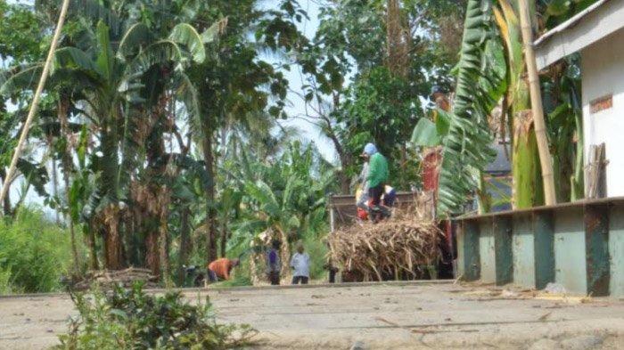Sudah Berjalan Dua Tahun, Pemilik Penimbangan Tebu di Situbondo Heran Warga Baru Memprotes