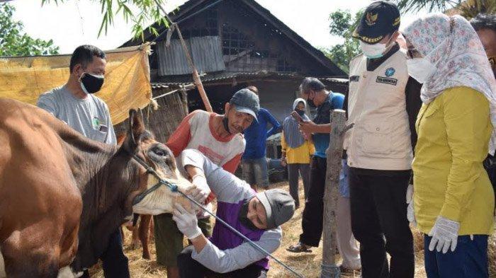 PPKM Tak Ganggu Transaksi Hewan Kurban di Lamongan, Penjualan Lebih Tinggi Dibandingkan Tahun Lalu