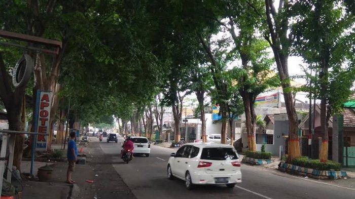 Warga Was Was Pohon Tumbang di Mojokerto