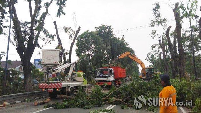 Antisipasi Bencana, DKRTH Surabaya Targetkan Perantingan 175 Pohon Setiap Hari