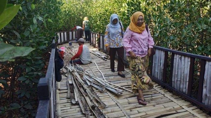 Bambu pada Jogging Track Mangrove Wonorejo Rutin Diganti, Kini Tak Lagi Pakai Bambu Utuh