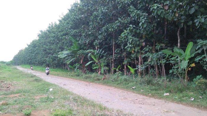 Perhutani Blitar Juga Memprotes Pabrik Gula RMI, Hutan 4,86 Ha Mendadak Menjadi Parkiran Truk Tebu
