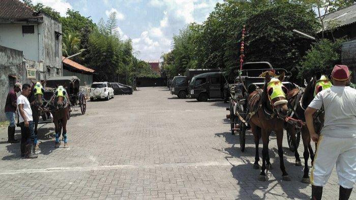 Jokowi Mantu - Empat Kuda Penarik Kereta Pernikahan Kahiyang Ayu-Bobby Nasution Itu Ternyata . . .