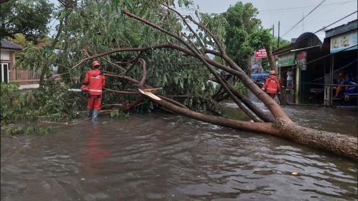 Hujan Deras Disertai Angin  Kencang Tumbangkan Sejumlah Pohon di Kota Kediri